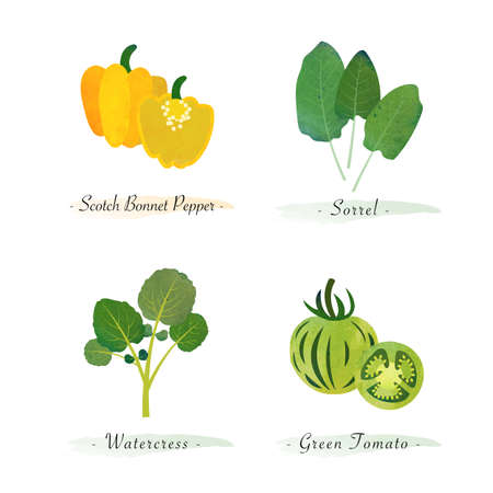 Watercolor healthy nature organic plant vegetable food ingredient scotch bonnet pepper sorrel watercress green tomato