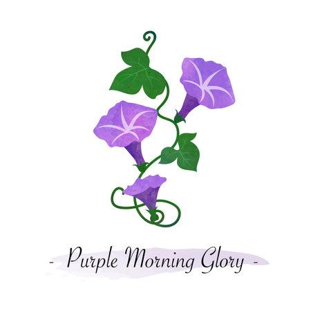 Colorful watercolor texture vector botanic garden flower purple morning glory flower 일러스트