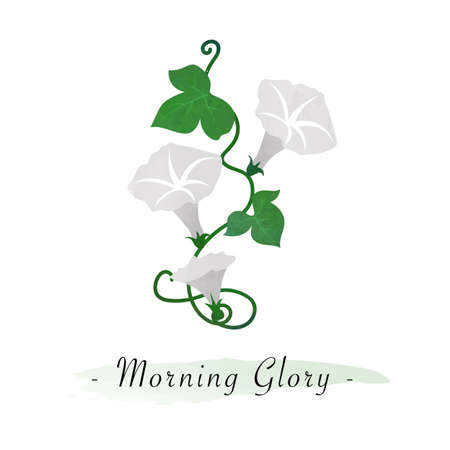 Colorful watercolor texture vector botanic garden flower white morning glory
