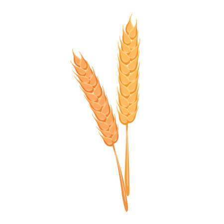 Cartoon vector illustration isolated object ear of rice  イラスト・ベクター素材