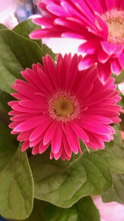 Pink flower close up view Stock Photo