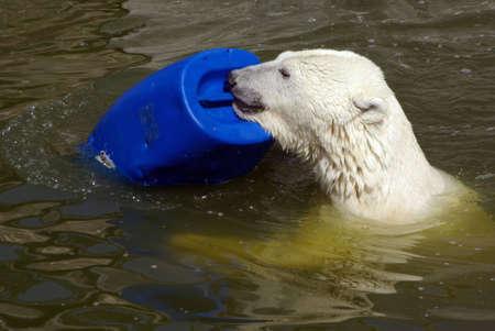 Playing Polar Bear photo