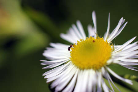 Ant and flower photo