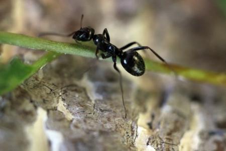 Ant photo