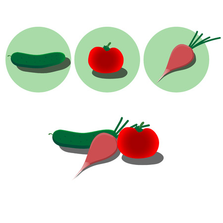 radish: Vector illustration isolated vegetables: tomato, cucumber, radish (eps)