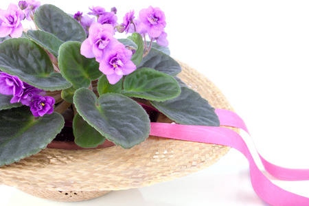 Purple violet standing in the straw hat decorated with ribbon photo