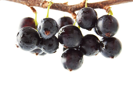 The blackcurrant on the branch, close up 免版税图像