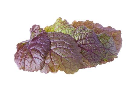 veiny: El mont�n de exuberante Mostaza hojas, aisladas Foto de archivo