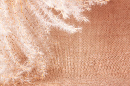 sheeted: Fluffy Perennial Grass placed on the Burlap