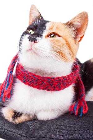calico: Joyful Calico Cat Watching Sideways Stock Photo