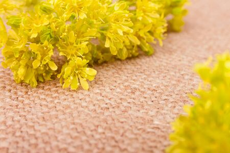 sheeted: Yellow Flower on the Burlap Background with Pathway Between Stock Photo