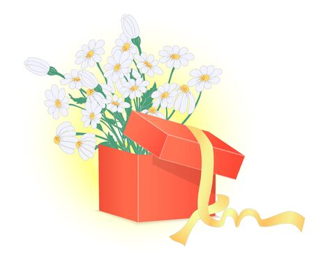 chamomile flower: Red Gift Box with Chamomile Flower Bouquet in it and Ribbons. Charming Gift to the Loved Ones. Illustration