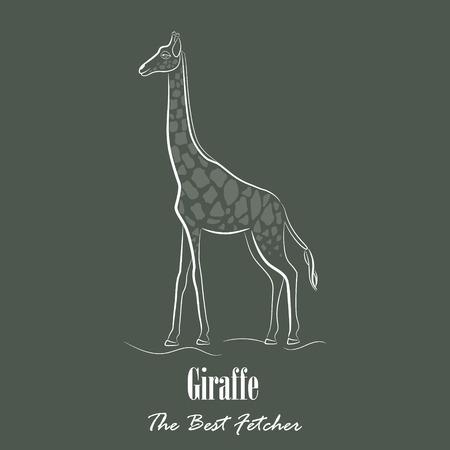 ruminant: White Giraffe Silhouette