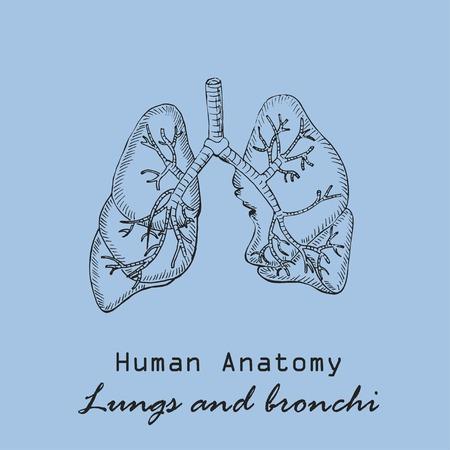 Hand drawn human lungs vector illustration. Illustration
