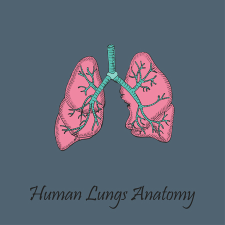 Hand Drawn Coloured Human Lungs Illustration
