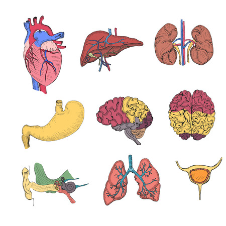 Hand Drawn Coloured Set with Human Organs Illustration