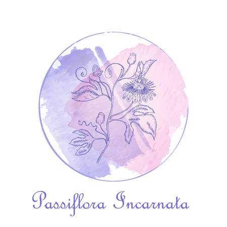 Round Badge with Black Contour Maypop Plant Placed on the Watercolor Spots with Brush Painted Frame. Label for Traditional Herbal Medicine, Cosmetology, Food Industry.
