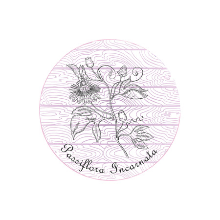 Round Badge with Contour Maypop Plant and Plank Wooden Background. Passiflora Incarnata Plant Name Bent by the Badge Shape. Label for Traditional Herbal Medicine, Cosmetology, Food Industry.