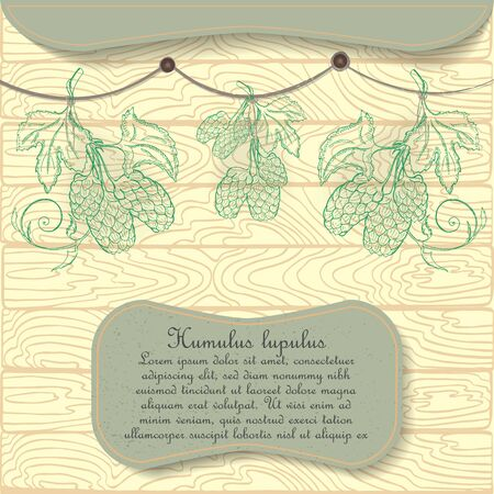 Hand Drawn Hop Plant Hung on the Rope for Drying under the Shed. Hand Drawn Wooden Background. Nameplate with the Latin Name Humulus Lupulus and Text. Leaflet for Traditional Herbal Medicine.
