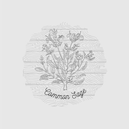 Round Badge with Contour Common Sage Bush on Plank Wooden Background. Common Sage Name Bent by the Badge Shape. Label for Traditional Herbal Medicine, Cosmetology, Food Industry.