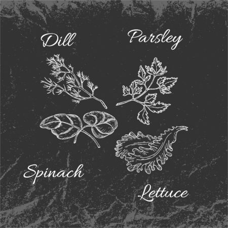 Hand Drawn Chalk White Vintage Parsley, Dill, Lettuce and Spinach Leaves Placed on Dark Backdrop with Texture. Textured Backdrop Made of Crumpled Packaging Paper. Vector Illustration EPS 10. Иллюстрация