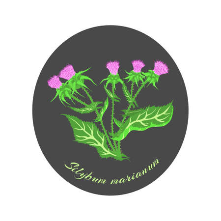 Painted Hand Drawn Bush of Blossoming Milk Thistle