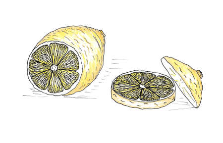 Hand Drawn Lemon Colored with Watercolor Pencils