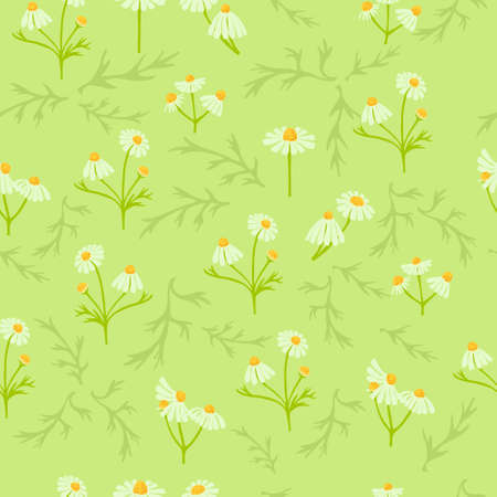 Seamless Pattern with Different Parts of Chamomile