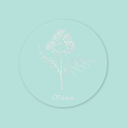 Hand Drawn White Bush of Valerian Placed on Blue