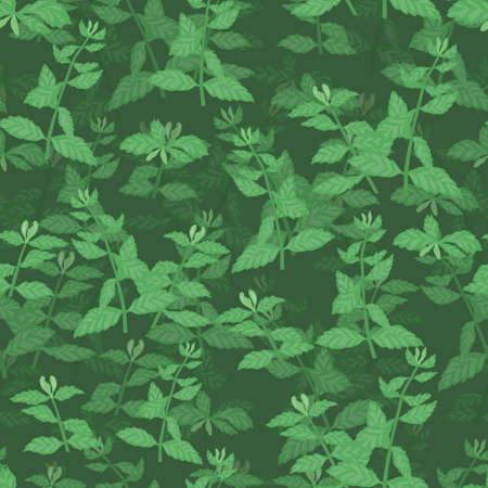 Seamless Pattern with Colored Mint Herb Twigs Vektorové ilustrace