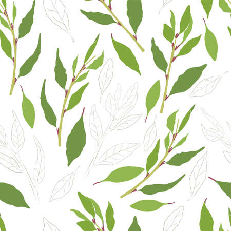 Seamless Pattern with Colored and Outlined Laurel Leaves and Twigs. Laurel branches and Leaves Isolated on White Backdrop. Ideal for Magazine, Recipe book, Poster, Card, Menu cover, any Advertising.