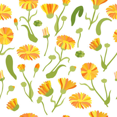 Seamless Pattern with Colored Calendula Parts. Twigs, Flower Heads and Leaves Placed Chaotically on White Backdrop. Ideal for Magazine, Recipe book, Poster, Card, Menu cover etc.