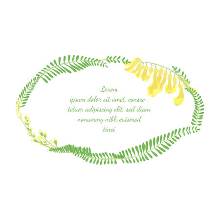 Frame with Elliptical Shape made with Hand Drawn Colorful Leaves and Flowers of a Astragalus Propinquus. Vector Illustration for Traditional Medicine Products, Posters, Designs. Illusztráció