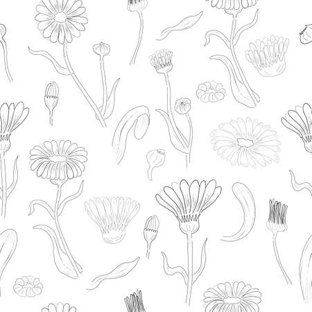 Seamless Pattern made of Calendula Branches, Flowers and leaves. Hand Drawn, Contour only Marigold Isolated on White Background. Ideal for Magazine, Recipe book, Poster, Cards, Menu cover etc.