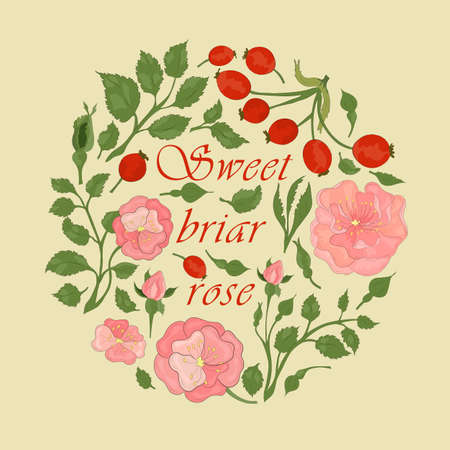 Rose Multicolor Parts Making Circle Composition. Hand Drawn Colored Sweet Briar Parts with Contour Neatly Arranged withing the Circle. Illustration for Traditional Medicine Products, Labels, Posters.