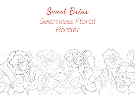 Seamless Border Made with Hand Drawn Rosa Canina Arranged Horizontally. Dog-Rose branches, flowers, buds, leaves, fruits made of contour only. Composition for Any Designs, Advertising etc.