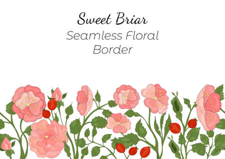 Seamless Border Made with Hand Drawn Rosa Canina Arranged Horizontally. Multicolored Dog-Rose branches, flowers, buds, leaves and fruits with contour. Composition for Any Designs, Advertising etc.