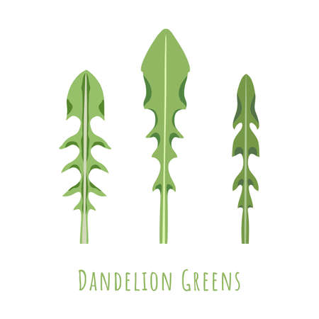 Three isolated different leaves of the Dandelion made in flat style. No outlined Symmetrical Leaf shapes filled with color only. Colorful vector illustration for product design, web and print usage.