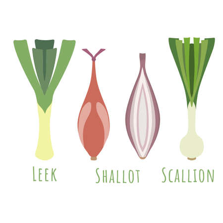 The leek, shallot and scallion isolated and made in flat style. No outlined Symmetrical shapes filled with color only. Colorful vector illustration for product design, web and print usage.