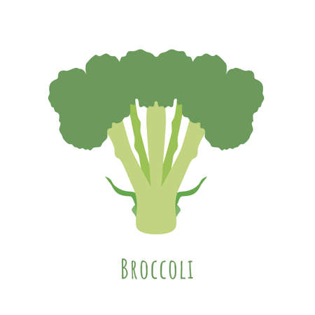 Single Broccoli vegetable isolated on white, made in flat style. No outlined, Symmetrical shape filled with color only. Vector illustration for product design, web and print usage.