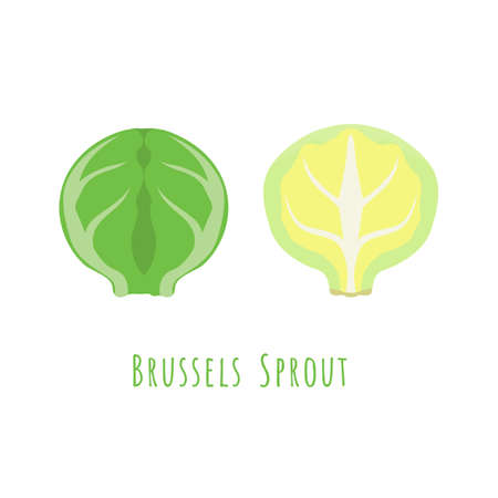 Whole and Half Brussels Sprout isolated on white, made in flat style. No outlined, Symmetrical shape filled with color only. Vector illustration for product design, web and print usage.
