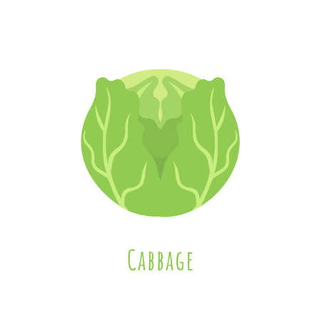 Single one Green Cabbage isolated on white, made in flat style. No outlined Symmetrical shape filled with color only. Colorful vector illustration for product design, web and print usage. 矢量图像