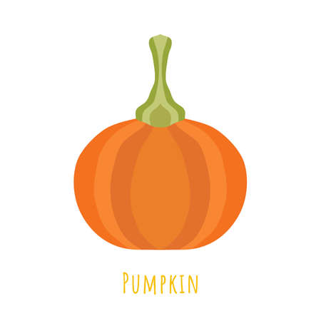 Single one pumpkin fruit isolated on white, made in flat style. No outlined Symmetrical shape filled with color only. Colorful vector illustration for product design, web and print usage.