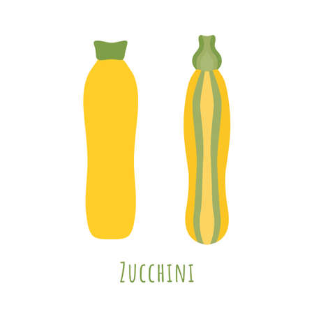 Yellow and striped zucchini isolated on white and made in flat style. No outlined Symmetrical shapes filled with color only. Colorful vector illustration for product design, web and print usage. 矢量图像