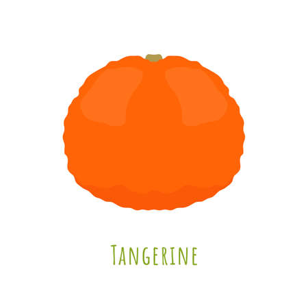 Single one tangerine fruit isolated on white, made in flat style. No outlined Symmetrical shape filled with color only. Colorful vector illustration for product design, web and print usage.