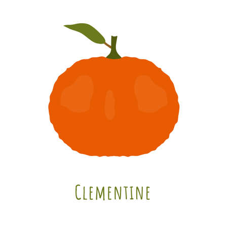 Single one clementine fruit with leaf isolated on white, made in flat style. No outlined Symmetrical shape filled with color only. Colorful vector illustration for product design, web and print usage.