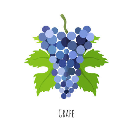 Bunch of a blue grape with green leaves. Flat style vector illustration. Symmetrical shape with shadow. 矢量图像