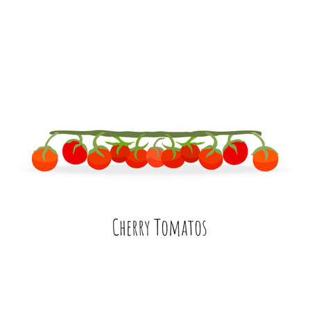 Bunch of cherry tomatoes with the branch