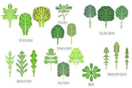 Big set with various greens made in flat style. No outlined Symmetrical Leaf shapes filled with color only. Colorful vector illustration for product design, web and print usage. 矢量图像