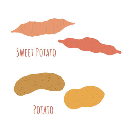Four whole regular and sweet potatoes isolated on white and made in flat style. Symmetrical shapes filled with color only. Colorful vector illustration for product design, web and print usage.